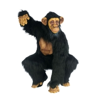 Complete-Chimpanzee-(Adult)